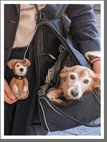Ellie in Tasche